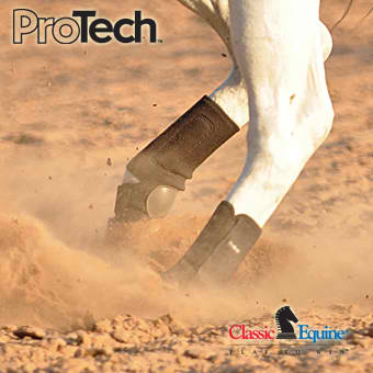 Classic Equine - Pro Tech - Hind